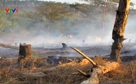 Khởi tố các đối tượng phá hoại rừng thông ở Lâm Đồng