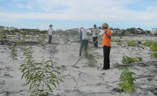 Trồng rừng ven biển ứng phó biến đổi khí hậu