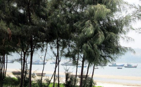 Tàn phá rừng phòng hộ ven biển và cái giá phải trả
