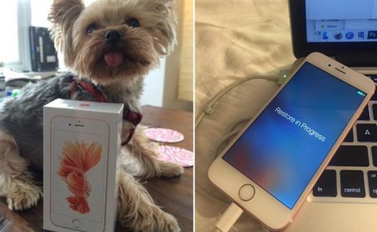 iPhone 6S bất ngờ đến tay người dùng trước ngày mở bán chính thức