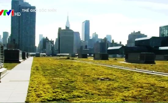 Mái nhà xanh giữa lòng New York