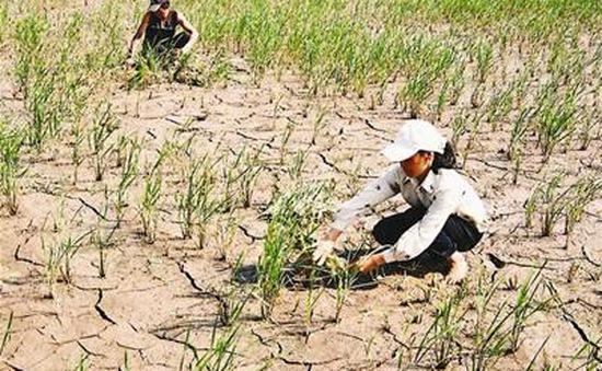 Việt Nam triển khai nhiều giải pháp ứng phó với biến đổi khí hậu