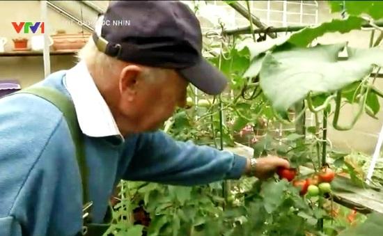 Tự trồng rau quả tại vườn nhà - Xu hướng mới