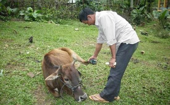 Dịch lở mồm long móng bùng phát mạnh tại Cao Bằng
