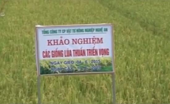 Chuyển giao giống lúa chất lượng cho miền Trung