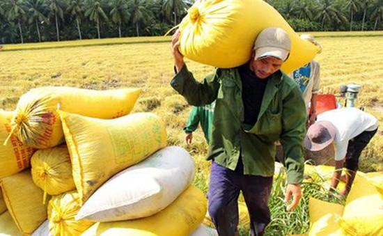 Vì sao nông dân ĐBSCL không muốn nhận tiền hỗ trợ đất lúa?