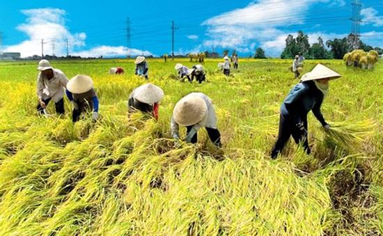 Việt Nam được lựa chọn thực hiện Bộ chuẩn mực về canh tác lúa bền vững