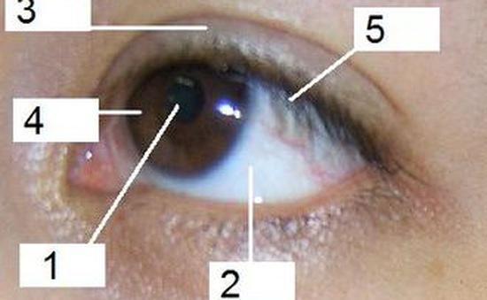 Nhìn mắt bắt bệnh - Bật mí bệnh tiềm ẩn qua mắt