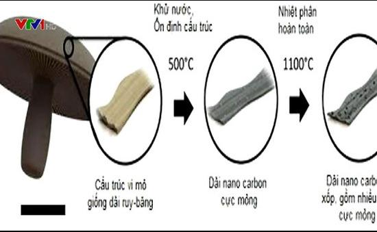 Chế tạo pin từ… nấm