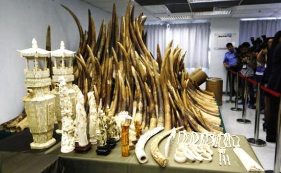 Nỗ lực ngăn chặn tình trạng săn voi lấy ngà