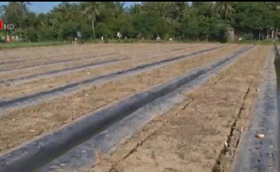 Nông dân ĐBSCL trước nỗi lo thiếu nước ngọt do xâm nhập mặn