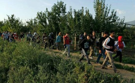 Croatia mở cửa biên giới với Serbia
