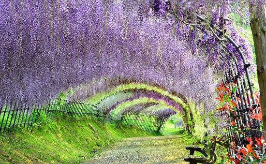 Vòng quanh Nhật Bản qua những khung cảnh nên thơ