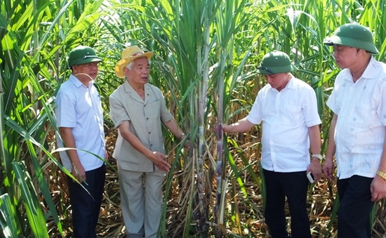 Nông nghiệp công nghệ cao - Giải pháp tăng hiệu quả kinh tế