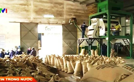 Nông sản Việt chỉ có giá bằng 65% giá thế giới