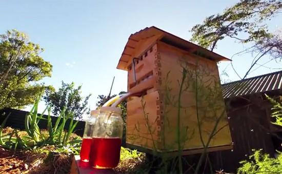 Flow Hive - Hệ thống khai thác mật ong tự động
