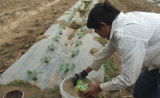 Nông dân Tây Nguyên thiệt hại với 'ma trận' phân bón giả