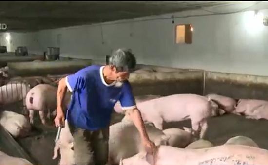 Chỉ thu 2 loại phí về kiểm dịch và kiểm soát giết mổ gia súc