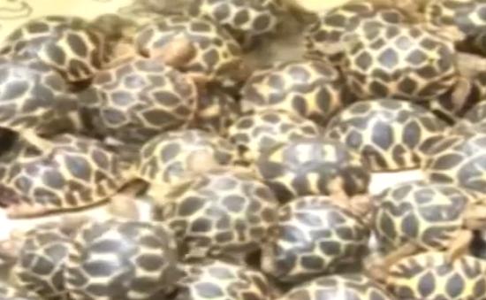 Ấn Độ thu giữ 200 con rùa sao ở sân bay Kochi