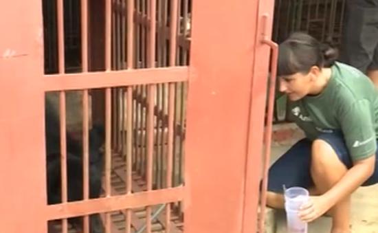 Cứu hộ 14 cá thể gấu ngựa về Tam Đảo