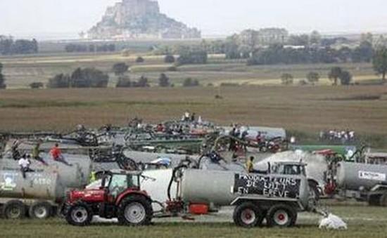 Nông dân Anh họp khẩn về giá sữa rẻ