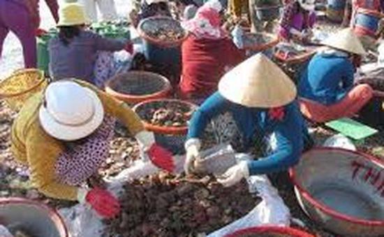 Biển Gành Son rộn ràng mùa khai thác sò