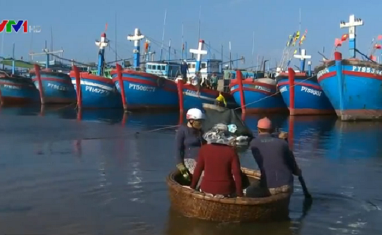 Ngư dân e ngại vay vốn hiện đại hóa tàu cá