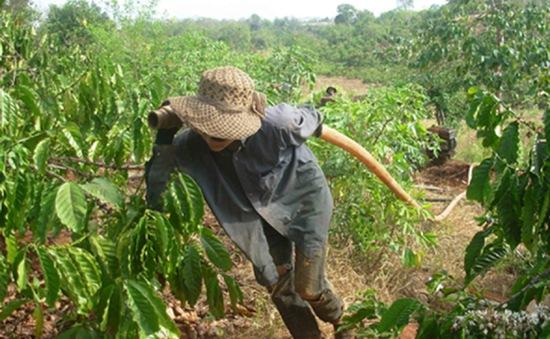 Trên 4.000 ha cây trồng sẽ bị thiếu nước tưới tại Kon Tum