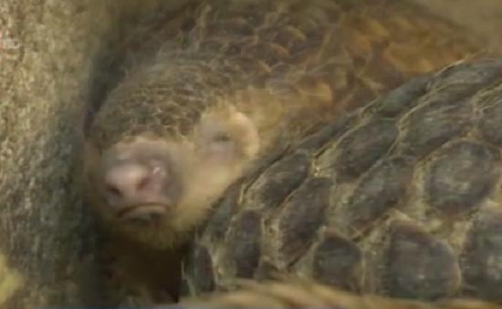 Lưu giữ quá lâu, nhiều động vật hoang dã chết tại cơ quan bảo quản