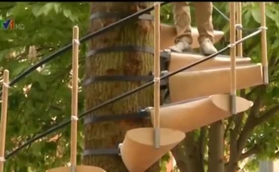 Độc đáo thang dây Canopy Stair an toàn với thiên nhiên