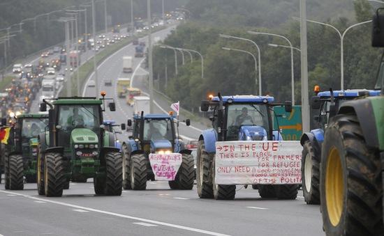Khủng hoảng giá nông sản tại châu Âu: Do đâu?