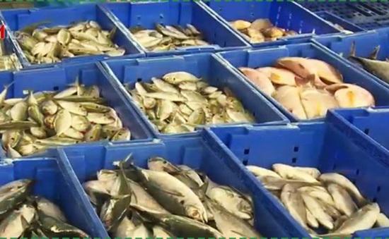 Giám sát dư lượng chất độc hại trong thủy sản nuôi