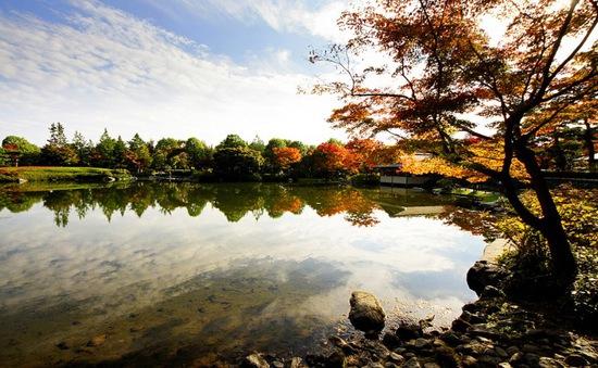 Đẹp ngất ngây mùa Thu vàng Tokyo