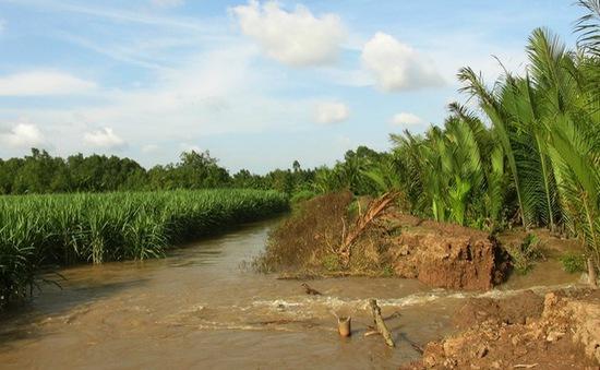 Triều cường dâng cao gây vỡ tràn nhiều đoạn bờ bao ở Cù Lao Dung