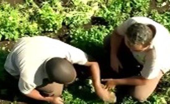 Brazil: Trung tâm mua sắm dùng rác thải trồng rau cho nhân viên