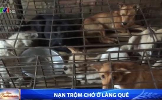 Trộm chó ngày càng manh động, liều lĩnh