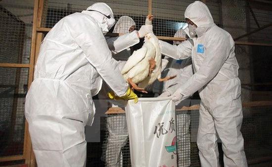 Trung Quốc có thêm một người tử vong do nhiễm cúm H7N9
