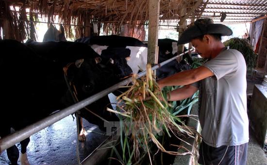 TP.HCM giảm tới hơn 100.000 hộ nghèo trong hơn 20 năm