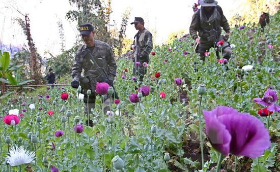 Myanmar, Thái Lan hợp tác tăng cường kiểm soát ma túy
