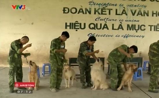 Trường dạy tiếng Anh dành cho chó cưng