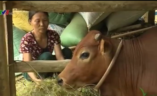 Hà Tĩnh: Phụ nữ Hương Khê nỗ lực vượt khó, thoát nghèo