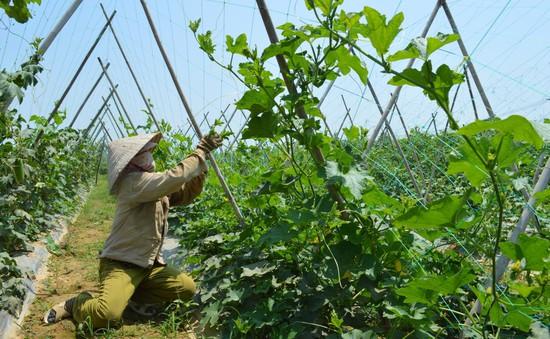 TP.HCM hỗ trợ 50% chi phí cho nông dân áp dụng mô hình VietGAP
