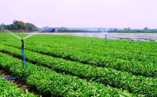 Chỉ 1/3 vùng sản xuất rau an toàn được kiểm định chất lượng sản phẩm mỗi năm