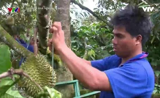 Nông dân Đăk Lăk lãi lớn nhờ mô hình canh tác dưới tán rừng