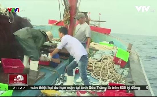 Gian nan hành trình tìm cá tươi của ngư dân Quảng Bình