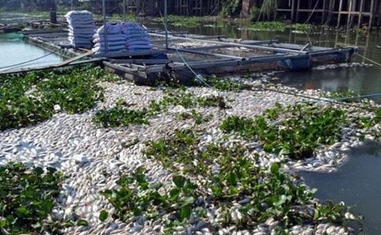 Đồng Tháp công bố nguyên nhân cá chết trên sông Cái Vừng