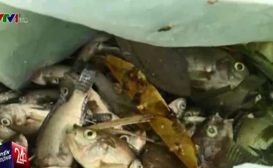 Thanh Hóa: Cá chết trắng hồ, công an vào cuộc