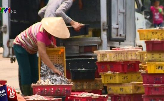 Đầu tháng 9 mới có thể công bố độ an toàn của cá biển miền Trung