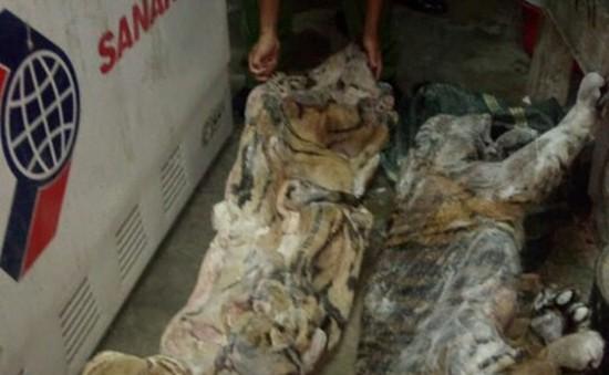 Nghệ An: Bắt đối tượng cất giấu cá thể hổ đông lạnh