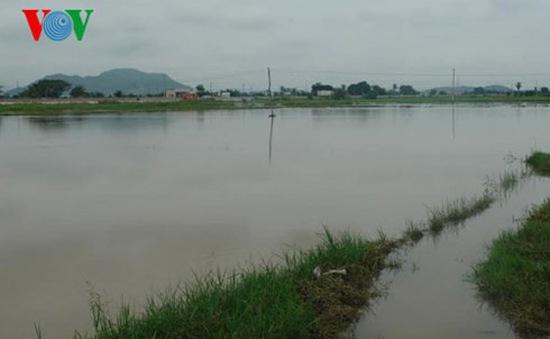 Mưa lớn tại Bình Thuận gây ngập cục bộ, tắc nghẽn  tuyến QL1A